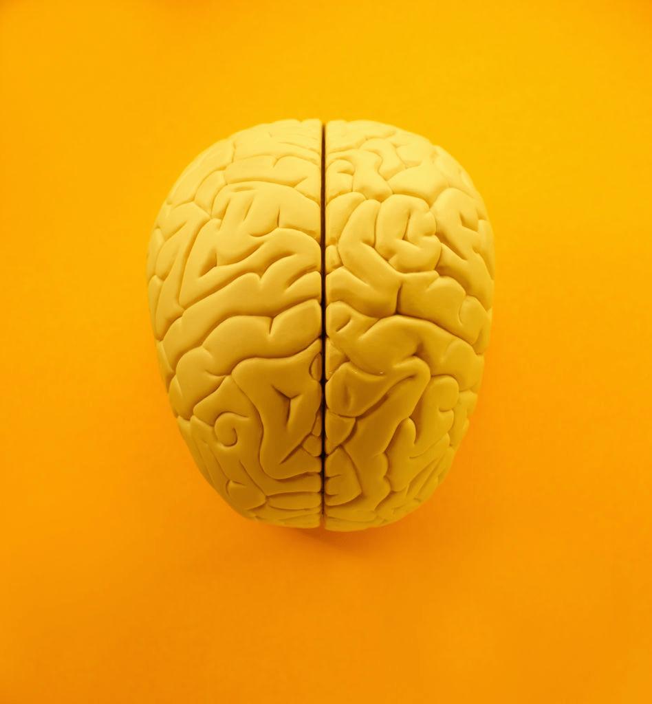 l'éducabilité cognitive